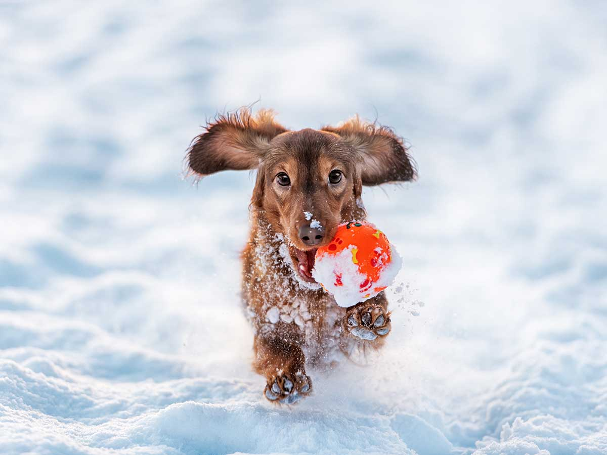 Aktiv hund